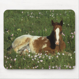 Appaloosa Foal Laying Down in Flowers Mouse Pad