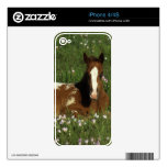 Appaloosa Foal Laying Down in Flowers Skins For The iPhone 4S