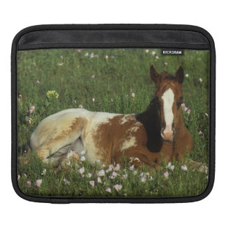 Appaloosa Foal Laying Down in Flowers Sleeve For iPads