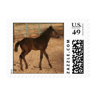 Appaloosa foal postage