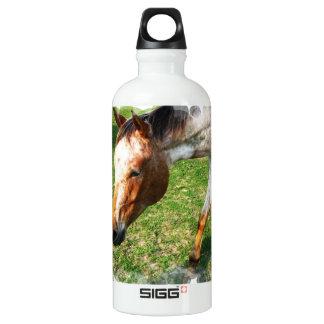 Appaloosa Horse Aluminum Water Bottle