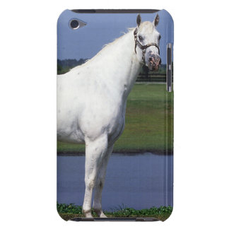 Appaloosa Horse Barely There iPod Covers