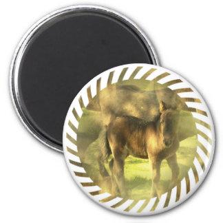 Appaloosa Horse Collage Magnet Fridge Magnet