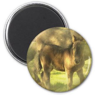 Appaloosa Horse Collage Magnet Refrigerator Magnet