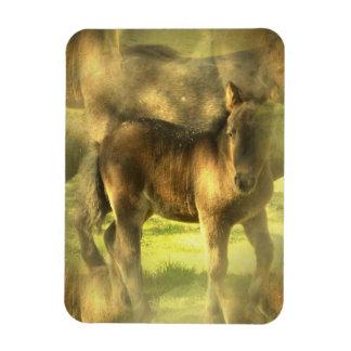 Appaloosa Horse Collage Premium Magnet Magnet