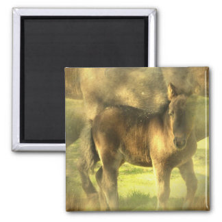 Appaloosa Horse Collage Square Magnet Magnets
