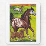 APPALOOSA HORSE Collie Dog Mousepad