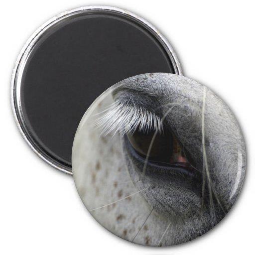 Appaloosa Horse Eye Equine Magnet