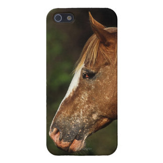 Appaloosa Horse Headshot 1 iPhone SE/5/5s Case