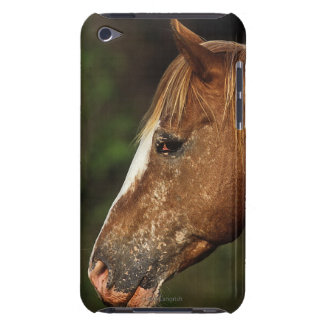 Appaloosa Horse Headshot 1 iPod Touch Cases