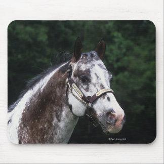 Appaloosa Horse Headshot 2 Mouse Pad