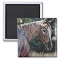 Appaloosa horse in a field magnet