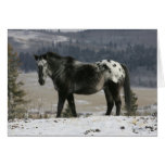 Appaloosa Horse in the Snow Greeting Cards