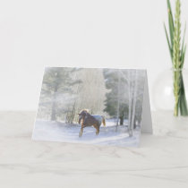 Appaloosa Horse in the snow Holiday Card