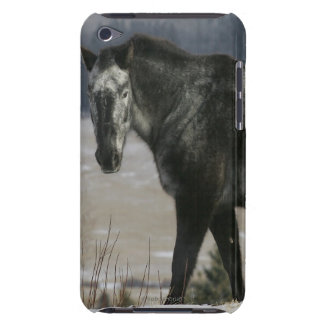 Appaloosa Horse in the Snow iPod Case-Mate Case