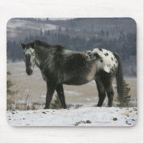 Appaloosa Horse in the Snow Mouse Pad
