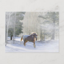 Appaloosa Horse in the Snow Season's Greetings Holiday Postcard