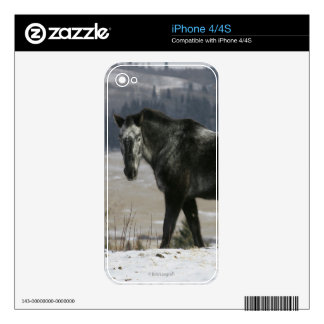 Appaloosa Horse in the Snow Skin For iPhone 4