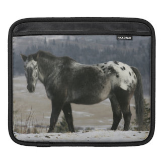 Appaloosa Horse in the Snow Sleeve For iPads