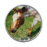 Appaloosa Horse Jelly Belly Tins