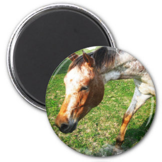 Appaloosa Horse Magnet Fridge Magnet