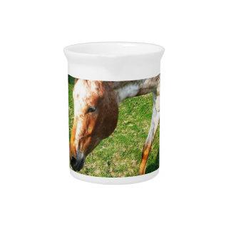 Appaloosa Horse Pitcher