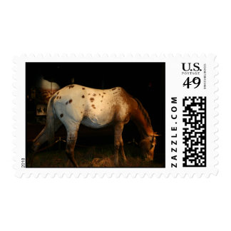 Appaloosa Horse Postage Stamp