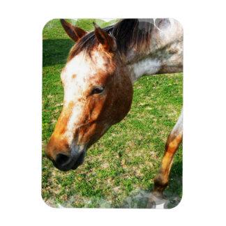 Appaloosa Horse Premium Magnet Flexible Magnet