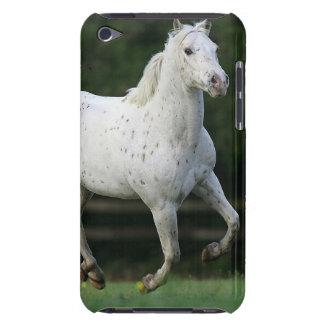 Appaloosa Horse Running 1 iPod Touch Case