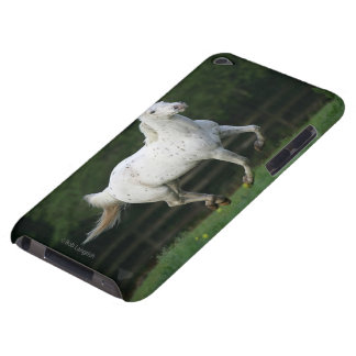 Appaloosa Horse Running 1 iPod Touch Cover