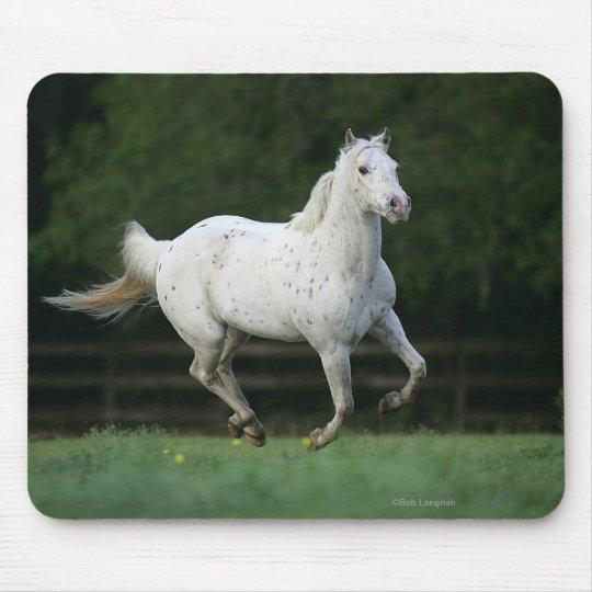 Appaloosa Horse Running 1 Mouse Pad