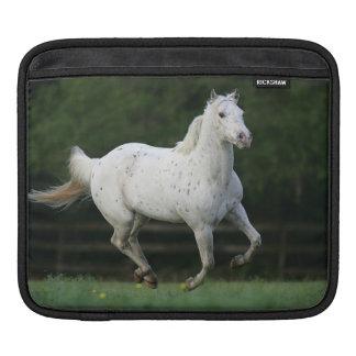 Appaloosa Horse Running 1 Sleeve For iPads
