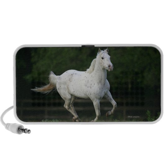 Appaloosa Horse Running 1 Speaker