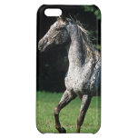 Appaloosa Horse Running 2 iPhone 5C Cover