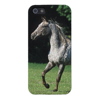 Appaloosa Horse Running 2 iPhone SE/5/5s Cover