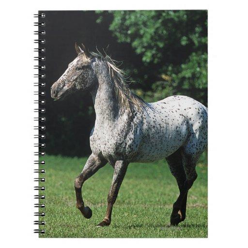 Appaloosa Horse Running 2 Journal