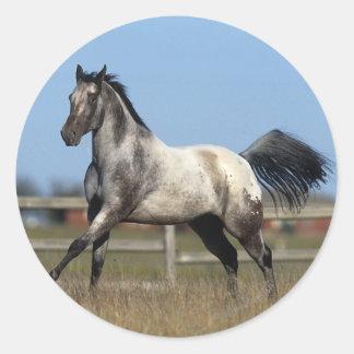 Appaloosa Horse Running 3 Classic Round Sticker