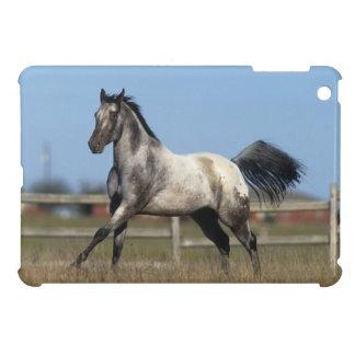 Appaloosa Horse Running 3 iPad Mini Cases