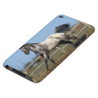 Appaloosa Horse Running 3 iPod Touch Cases
