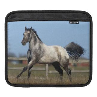 Appaloosa Horse Running 3 Sleeve For iPads