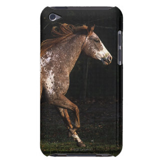Appaloosa Horse Running 4 Barely There iPod Cases