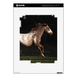 Appaloosa Horse Running 4 iPad 3 Skins