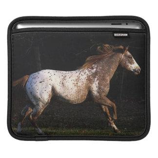 Appaloosa Horse Running 4 Sleeve For iPads