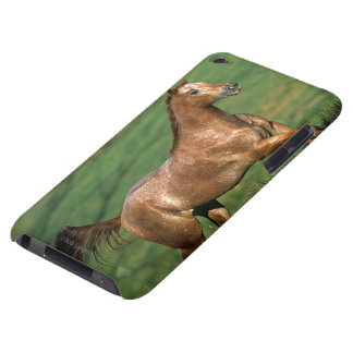 Appaloosa Horse Running in Grassy Field Barely There iPod Covers