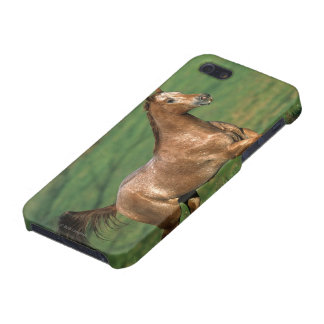 Appaloosa Horse Running in Grassy Field Case For iPhone SE/5/5s