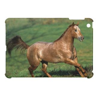 Appaloosa Horse Running in Grassy Field iPad Mini Cover
