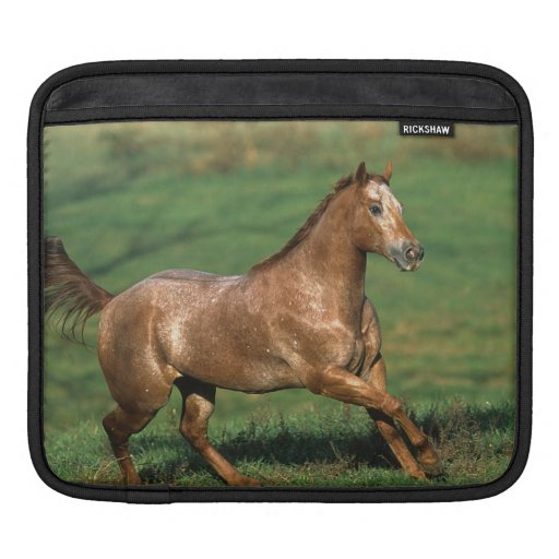 Appaloosa Horse Running in Grassy Field Sleeves For iPads