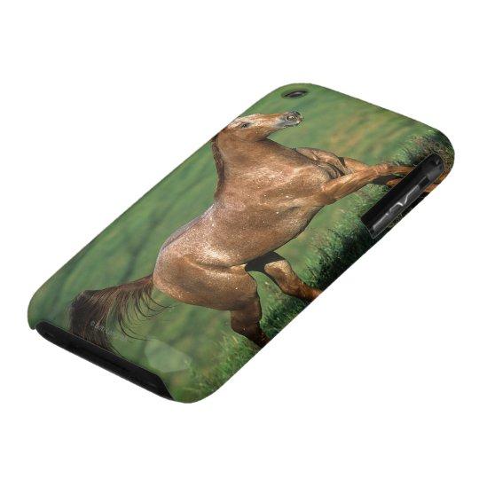 Appaloosa Horse Running in Grassy Field iPhone 3 Case