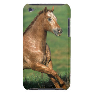 Appaloosa Horse Running in Grassy Field iPod Touch Cases