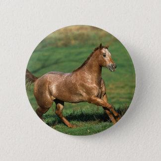 Appaloosa Horse Running in Grassy Field Pinback Button